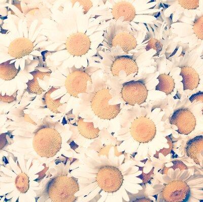Cuadro manzanillas flores - estilo vintage