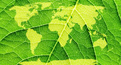Cuadro Mapa del mundo, continentes en fondo de la hoja verde.