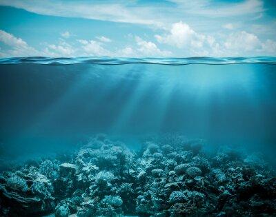 Cuadro Mar u océano bajo el fondo la naturaleza profunda