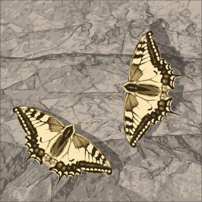 Cuadro Mariposa del vuelo en la pared del grunge.