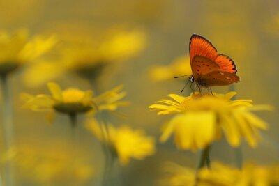 Cuadro mariposa en el jardín