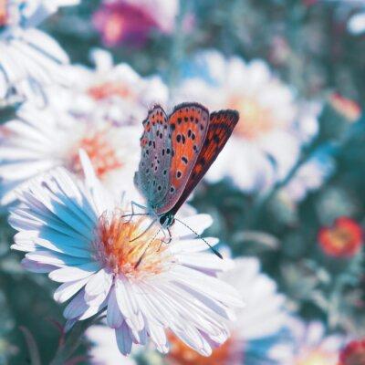 Cuadro Mariposa en la flor