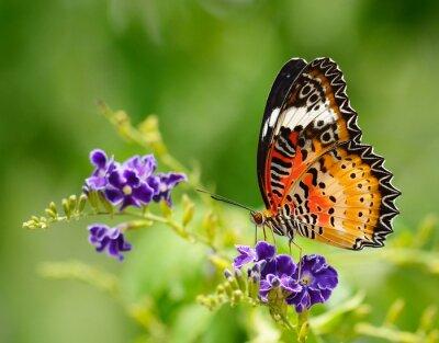Cuadro Mariposa en una flor violeta