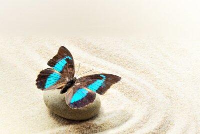 Cuadro Mariposa Prepona Laerte en la arena