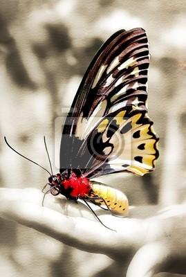 mariposa que se sienta en la mano - imagen en tonos