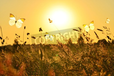 Cuadro Mariposa y prado de verano