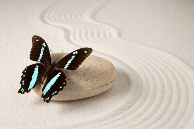 Cuadro Mariposa zen