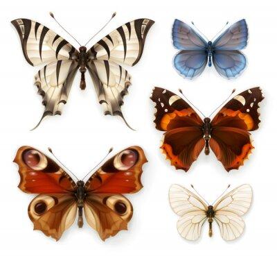 Cuadro Mariposas, conjunto de iconos de vectores