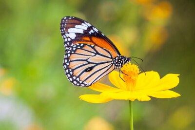 Cuadro Mariposas y Flores