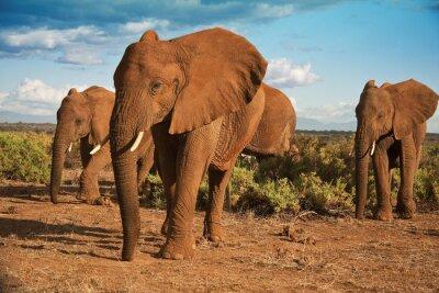 Cuadro Matriarcado elefante africano contra un cielo azul