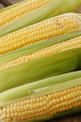 Cuadro mazorca de maíz