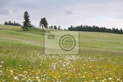 Cuadro Meadows