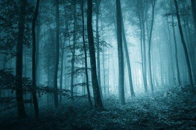 Cuadro Místico bosque de niebla de color azul soñadora
