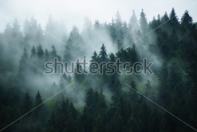 Cuadro Misty landscape with fir forest in hipster vintage retro style