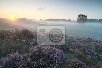 misty sunrise over pink heather flowers on hills