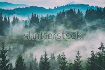 Cuadro Misty valle de montaña de los Cárpatos después de la lluvia. Estilización vintage grunge.