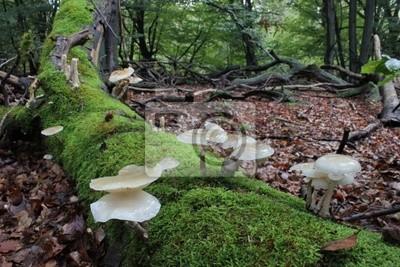 Moco libro Velvet pie en la selva Sababurg