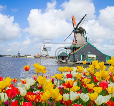 Molino de viento holandés sobre el campo de tulipanes