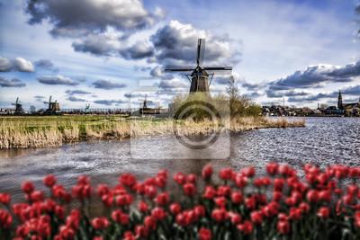 Cuadro Molinos de viento holandeses con tulipanes rojos cierran la Amsterdam, Holanda