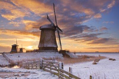 Cuadro Molinos de viento tradicionales holandeses en invierno al amanecer