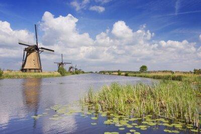 Cuadro Molinos de viento tradicionales holandeses en un día soleado en el Kinderdijk