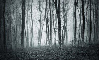 Cuadro Monocromo blanco y negro grunge textura de color brumoso paisaje de árboles de bosque místico.