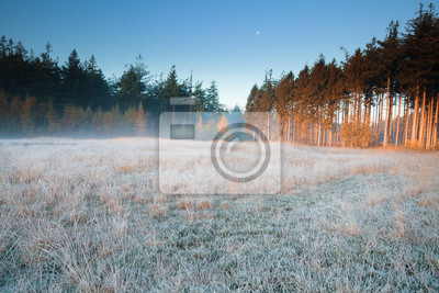 moon over frosted forest meadow in fog