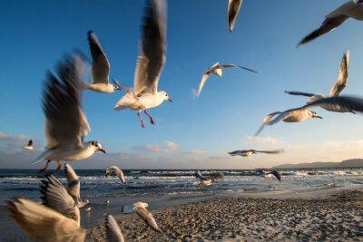 Cuadro Möwen im Flug Ostseeküste Binz Alemania