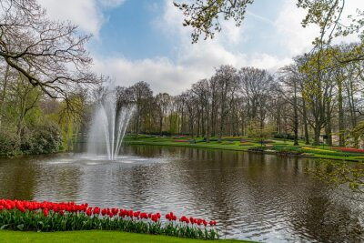Multi color hyacinth, pure red, pink white color tulips blossom blooming around a pond and under a very well maintained garden in spring time