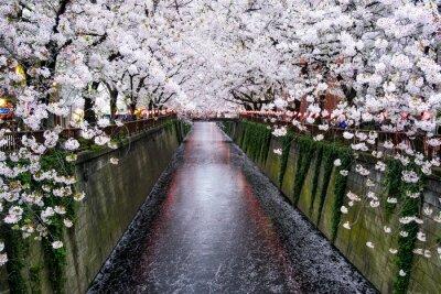 Cuadro Nakameguro Kanal en Tokio en el Kirschblüte en Frühling