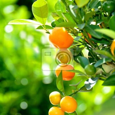 Cuadro Naranjas