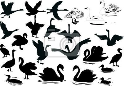 natación siluetas de aves