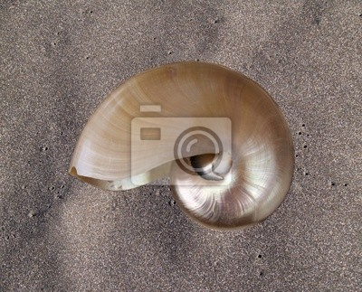 Nautilus Shell sobre la arena negro natural