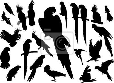 negro colección loros aislados