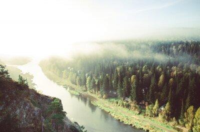 Cuadro Niebla gruesa de la mañana en bosque conífero. Coníferas, matorrales de bosque verde.