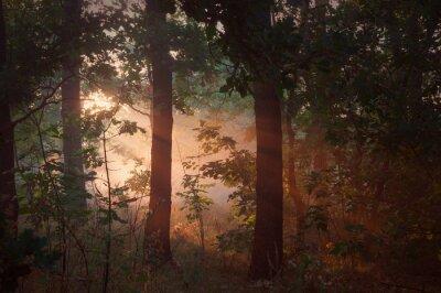 Cuadro Niebla por la mañana en el bosque