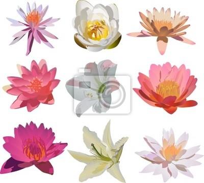 Cuadro nueve aislados colección flores de lis