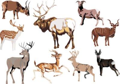 nueve animal con cuernos