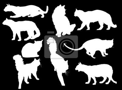 nueve gatos blancos sobre negro