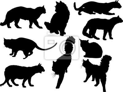 nueve gatos negros aislados