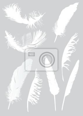 Cuadro ocho plumas blancas
