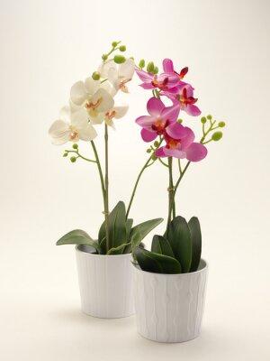 Cuadro Orchidea