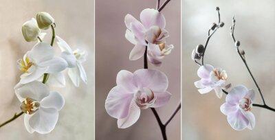 Cuadro Orchidea (storczyki) - pastelowe