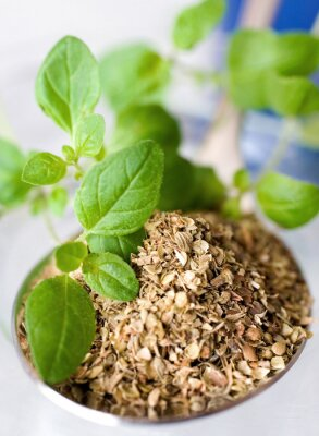 Cuadro Orégano fresco y seco / Origanum vulgare