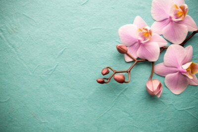 Cuadro Orquídea.