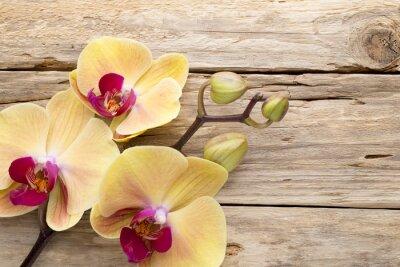 Cuadro Orquídea amarilla.