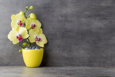 Cuadro Orquídea amarilla en el fondo gris.