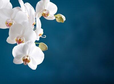 Cuadro Orquídea blanca