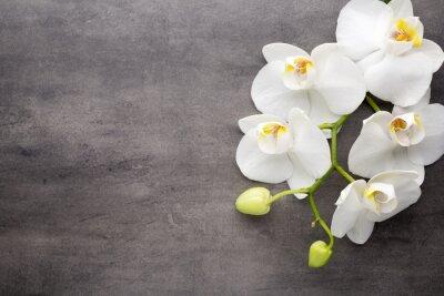 Cuadro Orquídea blanca en el fondo gris.