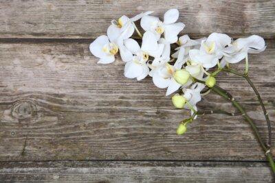 Cuadro Orquídea blanca (Phalaenopsis)